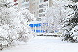 Trees covered in fresh fluffy snow in front of apartment