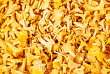 Background from chanterelle mushrooms