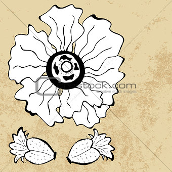 Sketch of poppy flower, vector