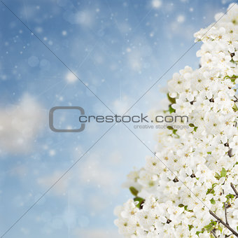 Blossoming Plum Flowers on sky