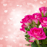 pink roses on background with hearts