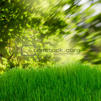 green grass under trees