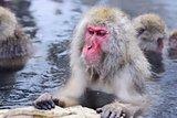 Snow Monkey Park