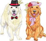vector funny pair of dogs labrador retriever wearing hats and ti