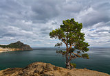 Lone Pine over Baikal