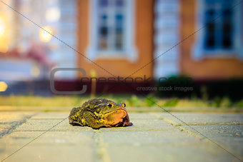 A Close Up Of The Toad