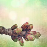 textured old paper background with spring blossoming tree buds