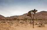 Joshua Tree National Park in Southern California