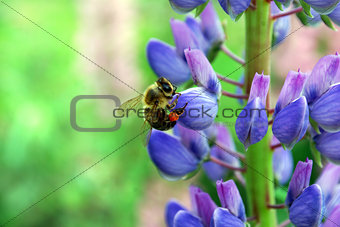 A bee collecting nectar on a flower