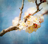 textured old paper background, bee collects honey on a flower