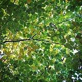 autumn green leaf background