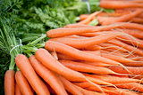 fresh orange carrots on market in summer