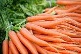 fresh orange carrots on market in summer