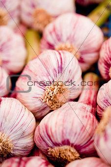 group of purple white garlic in basket macro