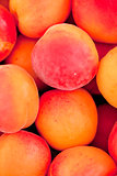 fresh orange red apricots peaches macro closeup on market