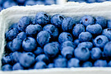 healthy fresh blueberries macro closeup on market outdoor