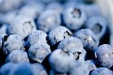healthy fresh blueberries macro closeup on market outdoor
