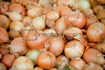 group of golden onion macro closeup outdoor market