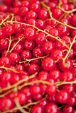 fresh tasty red currant berries macro closeup on market outdoor