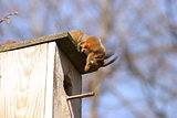 Squirrel and birdhouse on the tree in spring
