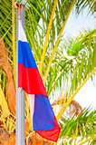 Russian flag on a background of palm trees