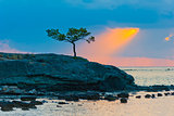 lone pine tree on a rocky seashore and sunbeam
