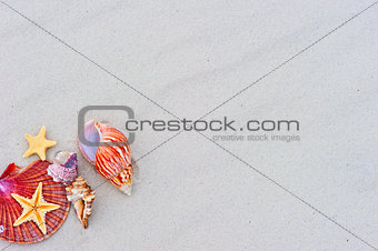 Starfishes and seashells on sand with copy space