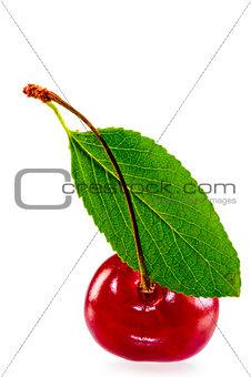 green leaf and juicy ripe cherries
