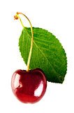 shiny ripe cherry and leaf