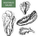 Salad - set of vector illustration - hand drawing