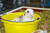 young rabbit in pail
