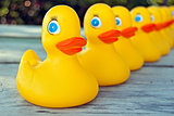 yellow duck in a row