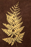 Gold Fern