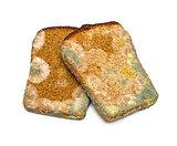 Mouldy rye bread