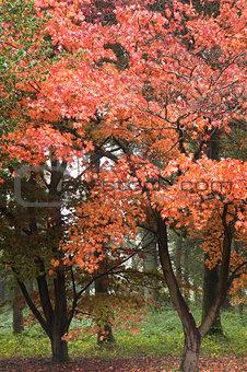 Beautiful Autumn Fall nature image landscape