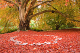 Beautiful Autumn Fall nature fairy ring mushrooms