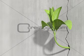 Little 3d plant growing on a concrete wall