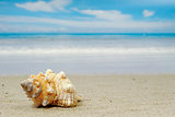 Conch shell on exotic beach