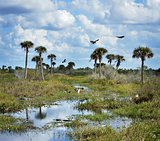 Florida Wetlands Scenic View