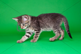 Playful Tabby Cat Cutout