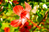 Beautiful red flower against green vegetation in summer day