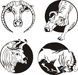 round designs with bulls