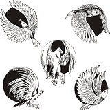 round designs with eagles and falcons