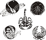 round designs with insects