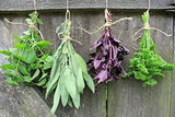 Fresh herbs hanging for drying