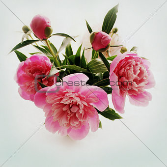 bouquet of pink peony