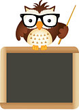Owl Teacher with School Board
