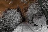 Mountain path in winter night, Varese