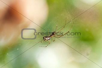 small spider on a cobweb spiderweb in summer outdoor garden