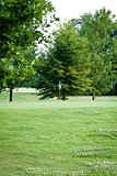 beautiful park geen grass and trees background copyspace